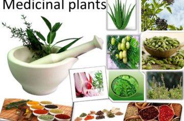 آشنایی با مراحل ثبت شرکت گیاهان دارویی
