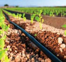 گرید ۵ کشاورزی / سهامی خاص