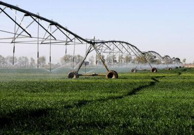 خرید شرکت رتبه ۵ کشاورزی – بدون واسطه...