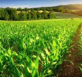 فروش شرکت رتبه ۵ آب و کشاورزی