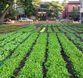 فروش و واگذاری شرکت رتبه ۴ کشاورزی