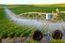 شرکت آب و کشاورزی رتبه ۵